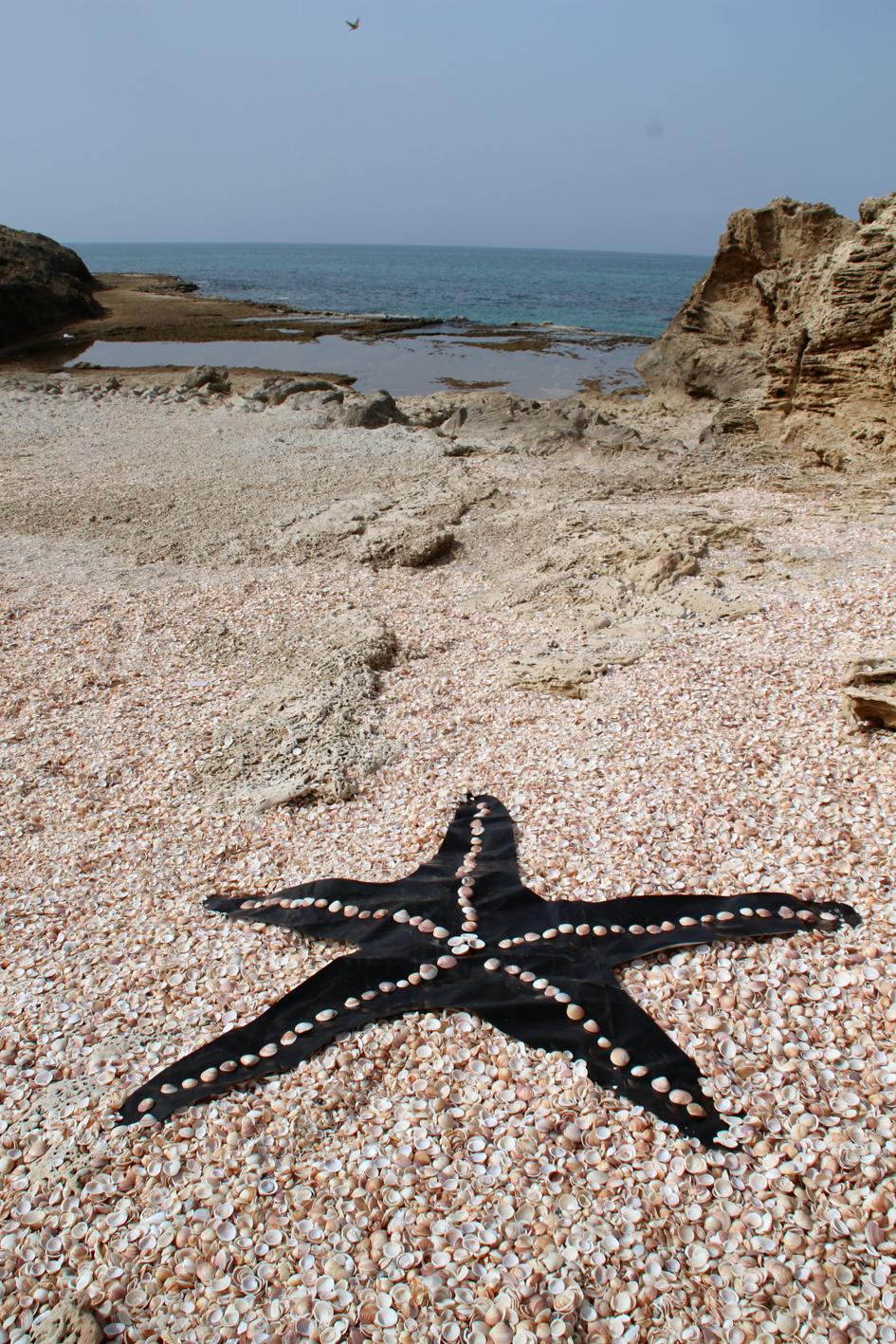 """""""כוכב ים"""" – יריעת פוליאתילן וצדפים. חוף הבונים. 2018"""